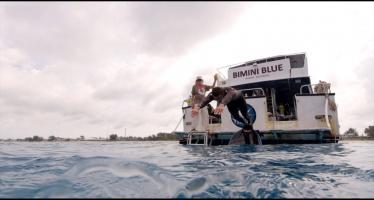 Phelps vai nadar com tubarões!