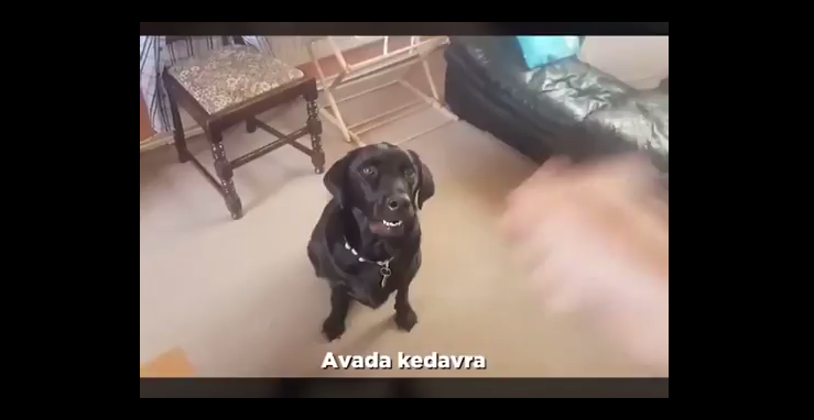 Cão Feiticieiro